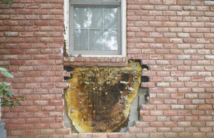 bee hive in wall