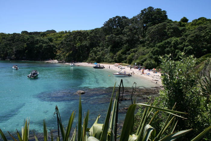 Tiritiri Matangi Island in New Zealand