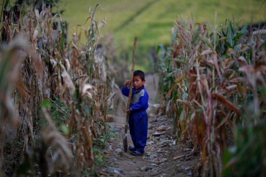 Niño con una pala en una granja