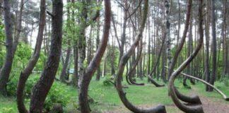 J-shaped-trees